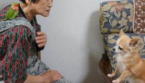 老齢者施設への慰問事業